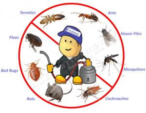 cost of pest control services swanbank