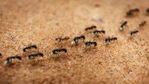 pest control prices ironbark